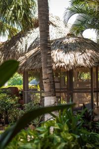 Puerto Dreams Surf House, Гостевые дома  Пуэрто-Эскондидо - big - 20