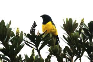 Alojamiento Reserva Ecologica Andes, Affittacamere  Bogotá - big - 4