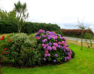 Cill Bhreac House B&B, Bed and Breakfasts  Dingle - big - 38