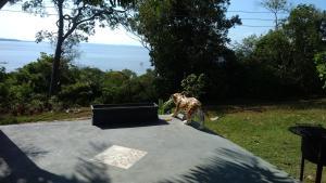 obrázek - Casa Varanda do Tupé