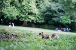Safestay Holland Park (34 of 200)