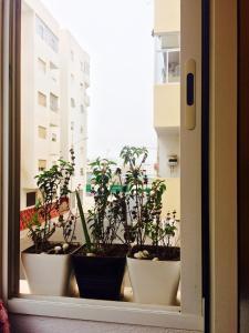 Residence Najah, Apartments  Agadir - big - 1