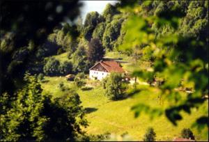 La Ferme du Vieux Sapin - Accommodation - La Bresse Hohneck