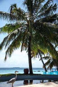 Filitheyo Island Resort (7 of 175)