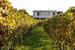 Oliveto Villa