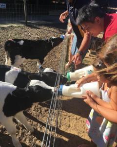 Hostels und Jugendherbergen - Sunflowers Animal Farm & Farmstay