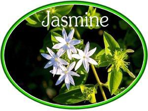 Jasmine Luxury Cottages