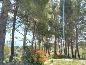 Villa del Mar Scopello, Ville  Scopello - big - 42