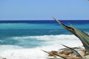 obrázek - Kissonerga beach apartment