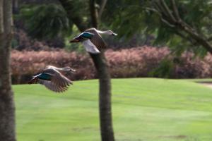 Oxford Golf Resort, Rezorty  Pune - big - 42