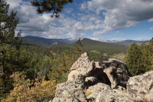 Blue Sky Mountain Ranch, Prázdninové domy  Black Hawk - big - 4