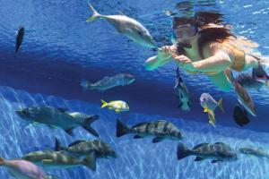 RumFish Beach Resort by TradeWinds (34 of 45)