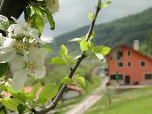 Hotel Garvanec, Vidiecke domy  Druzhevo - big - 1