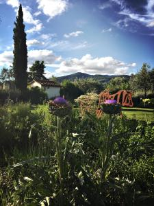 Il Canto del Maggio (21 of 50)