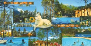 Location gîte, chambres d'hotes Parc Résidentiel de Loisir : Le Loup Blanc du Riou dans le département Alpes de haute provence 4