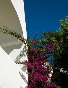 Hotel Gatto Bianco (18 of 85)