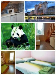 Green Panda Apartments