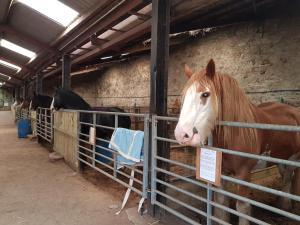 Hay Farm House, Bed & Breakfast  Ford - big - 54