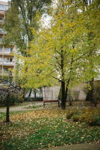Solec 28 Apartament, Ferienwohnungen  Warschau - big - 128
