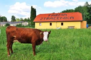 Farma Ztracenka - Kaliště