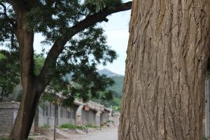Chunhuayuan Inn(Badaling Great Wall No.1 branch), Penziony  Yanqing - big - 12