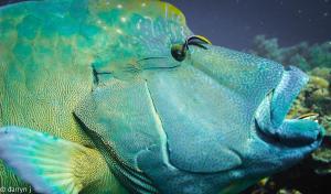 Blue Marlin Dive Komodo, Penzióny  Labuan Bajo - big - 7