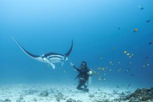 Blue Marlin Dive Komodo, Penzióny  Labuan Bajo - big - 6