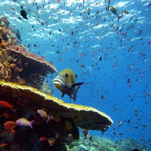 Blue Marlin Dive Komodo, Penzióny  Labuan Bajo - big - 12
