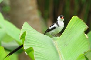 Mucumbli, Chaty v prírode  Ponta Figo - big - 39