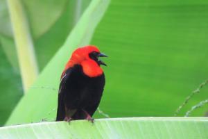 Mucumbli, Chaty v prírode  Ponta Figo - big - 41