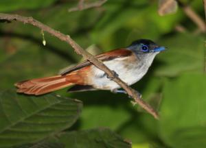 Mucumbli, Chaty v prírode  Ponta Figo - big - 37