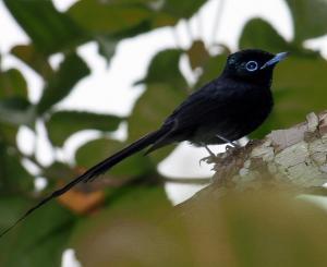Mucumbli, Chaty v prírode  Ponta Figo - big - 38