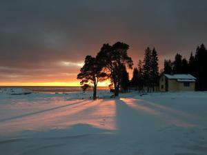 Cedar Grass Beloye More - Samoylovichi