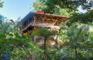 Canopy, Punta Uva