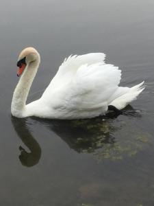 Swan Song Inn, Bed & Breakfasts  Marshfield - big - 65
