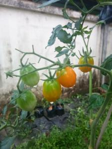 Zity Garden Home - Ban Lo Long