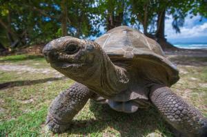 Le Nautique Seychelles (40 of 46)
