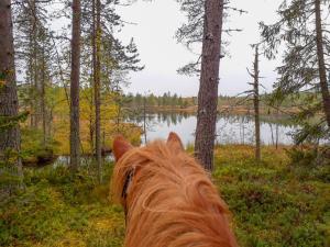 Villa Raatteenranta, Vily  Kuusamo - big - 7