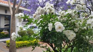 Rosebank Lodge Guest House, Pensionen  Johannesburg - big - 76