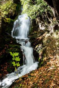 obrázek - Waterfall Retreat Estate with pool