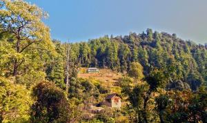 Suket homestay, Проживание в семье  Karsog - big - 9