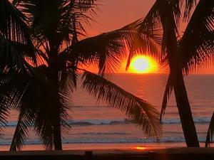 Gallina E Palo Beachfront Hotel, Jacó