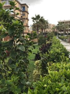 Zahrat Al Mamora, Apartmány  Alexandria - big - 29