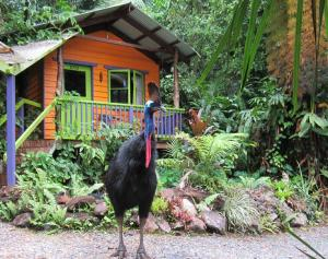 Rainforest Hideaway - Cape Tribulation