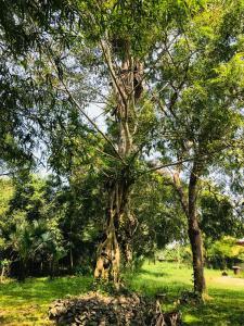 Nelum Villa Holiday Resort, Hotely  Anuradhápura - big - 52