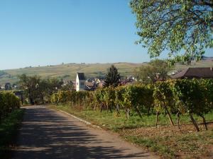 gîtes au domaine Greiner - Katzenthal