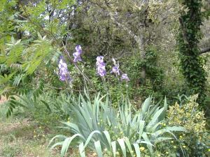 les-jardins-de-valaurie