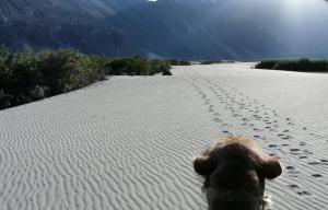 Tsashung Homestay,Hunder Nubra,Leh Ladakh, Проживание в семье  Лех - big - 24