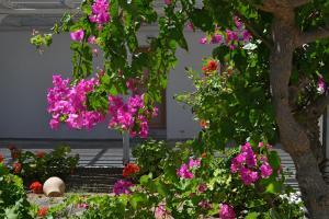 Surfing Beach Village Paros, Hotel  Santa Maria - big - 92
