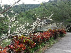 Yi He Golden Homestay, Prázdninové domy  Mizhan - big - 21